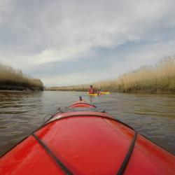 Le delta de la Leyre